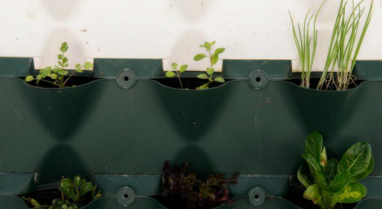 Saiba como ter uma horta vertical em apartamento