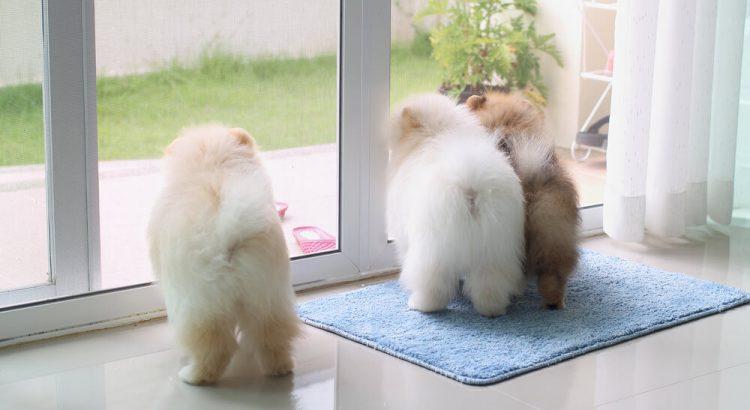 Conheça 4 opções de pisos para quem tem animais de estimação
